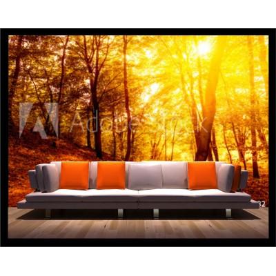 Murale - Forêt automne